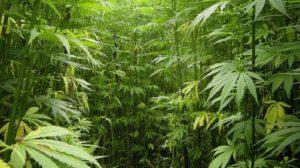 ohio-man-calls-cops-to-complain-he-got-too-high-on-marijuana-u-s-news-world-report-689x385